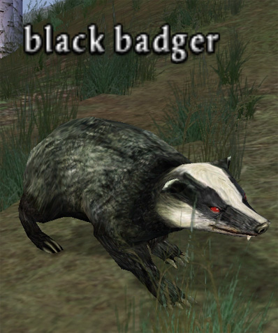 Picture of Black Badger