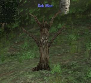 Picture of Oak Man (Hib)